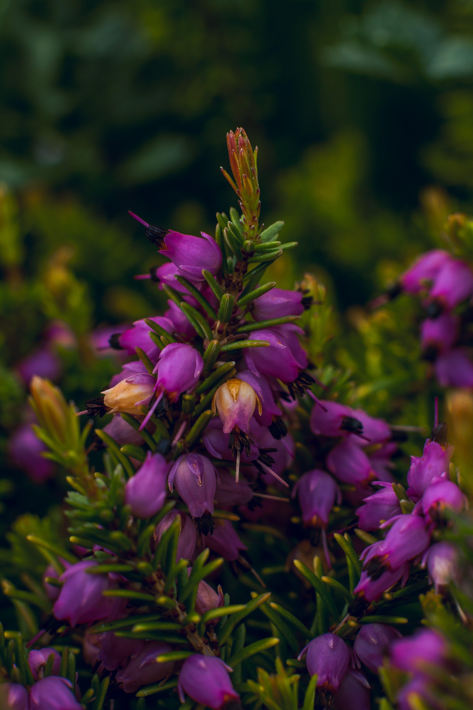 Foto profissional grátis de Arizona, biologia, bokeh, botânica