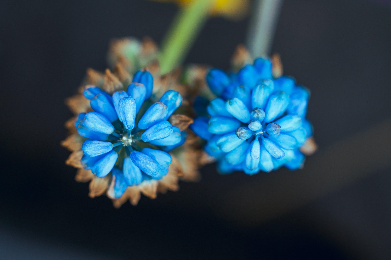 Foto profissional grátis de abril, biologia, bokeh, botânica