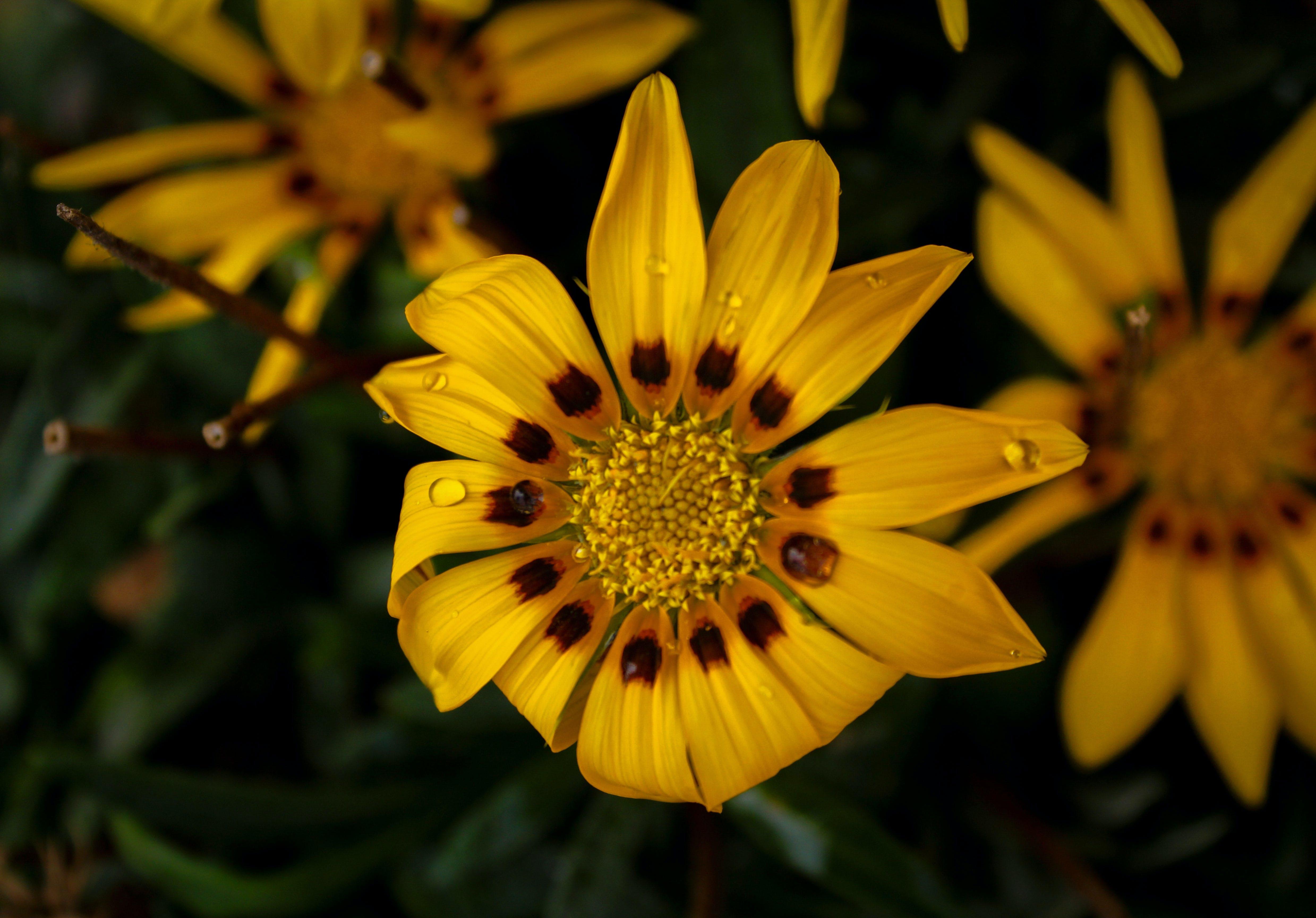 Gratis lagerfoto af gul blomst, kunstige blomster, smuk blomst
