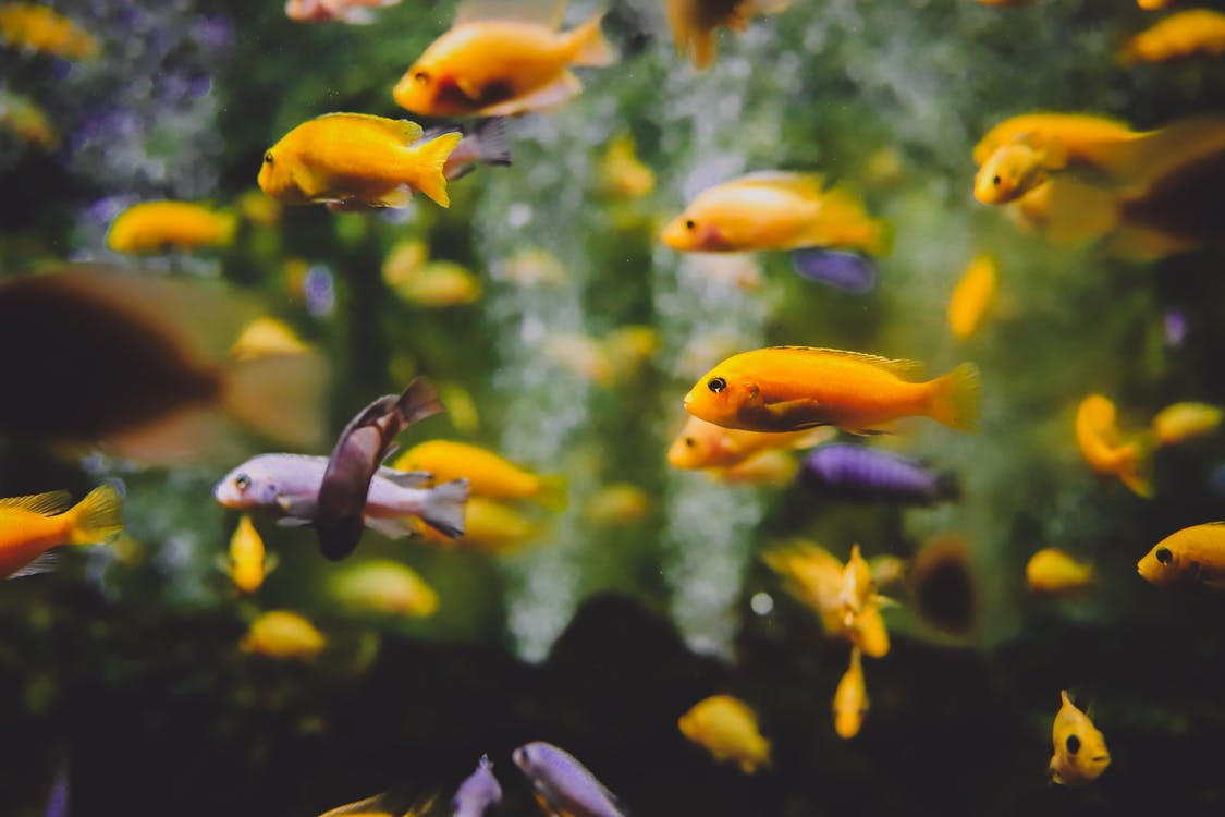 Shallow Focus Photography Of School Of Fish