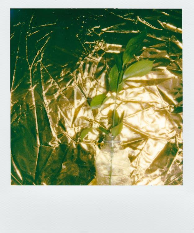 abstrakt, baggrund, blade