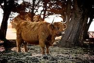 animal, countryside, farm