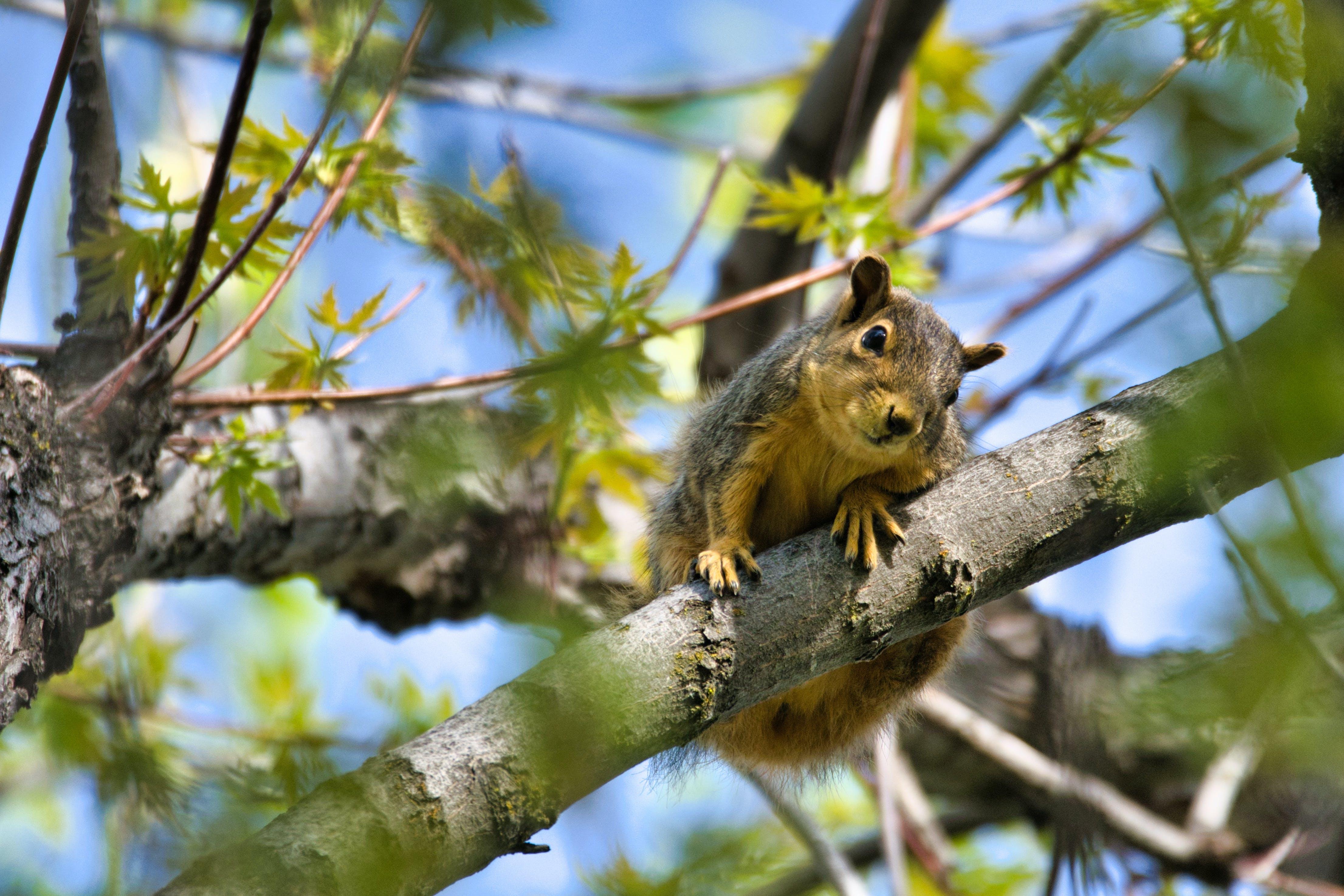 Immagine gratuita di albero, alla ricerca, ambiente, animale