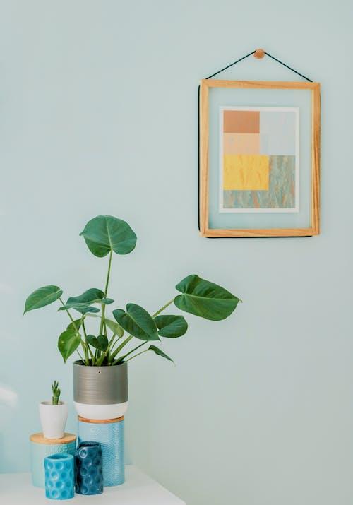 Orbicular Plant on Desk