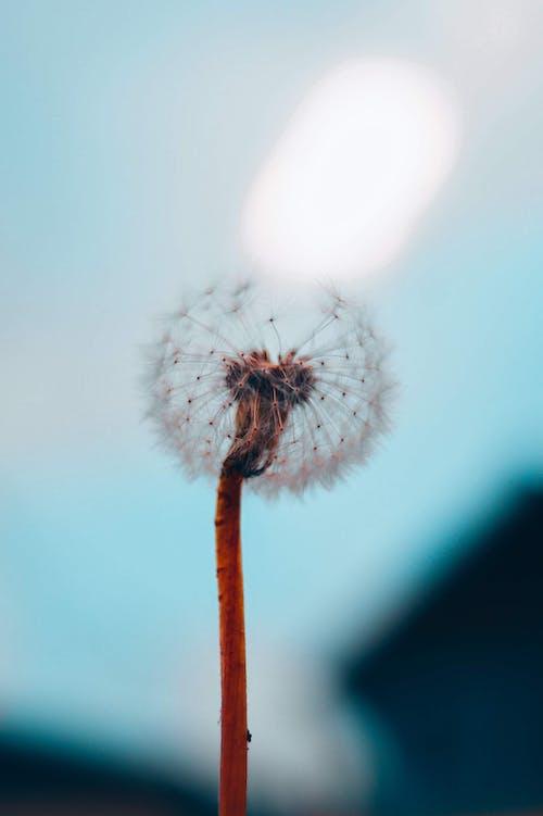 微妙, 植物群, 淺焦點, 特寫 的 免費圖庫相片