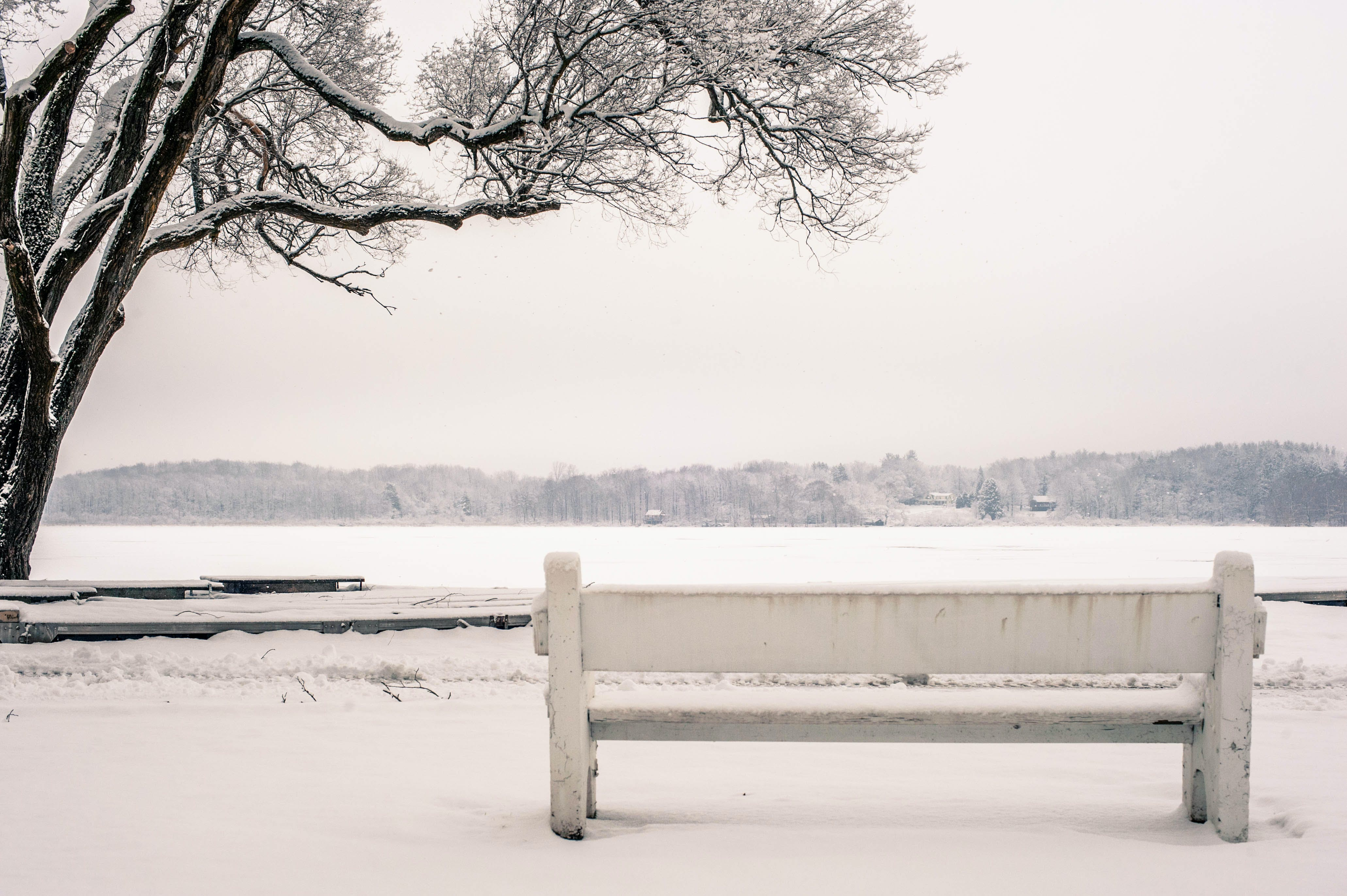 bench, cold, fog