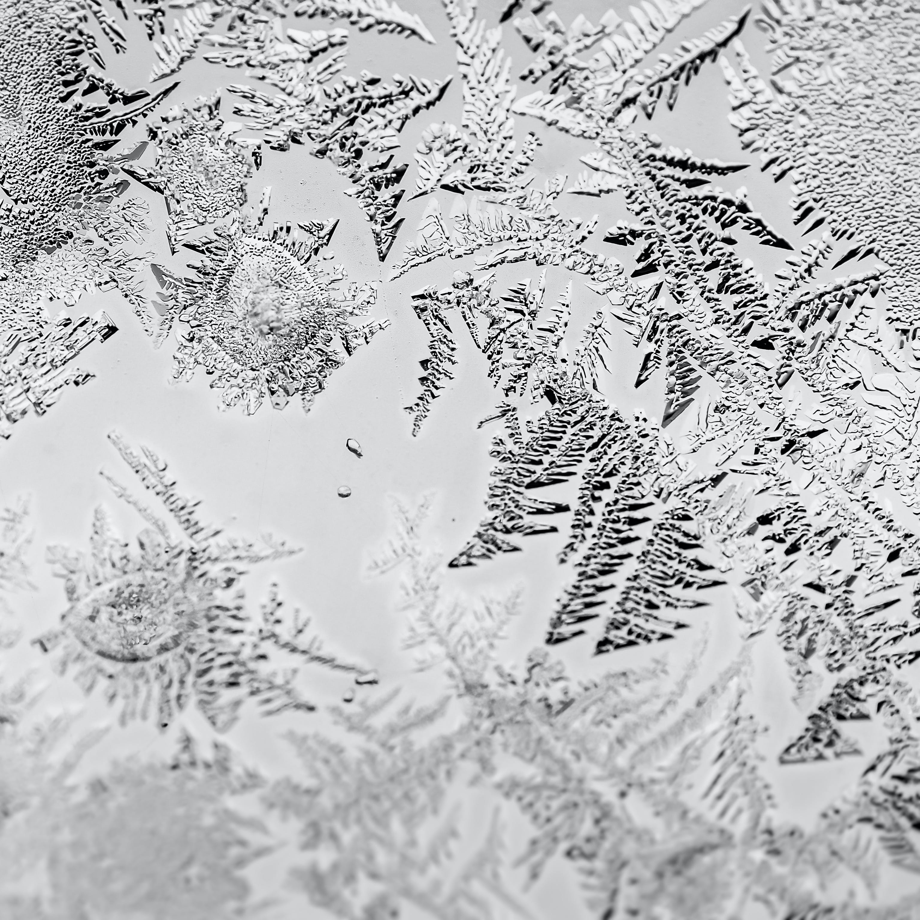 Free stock photo of black and white, cold, frost, macro photography