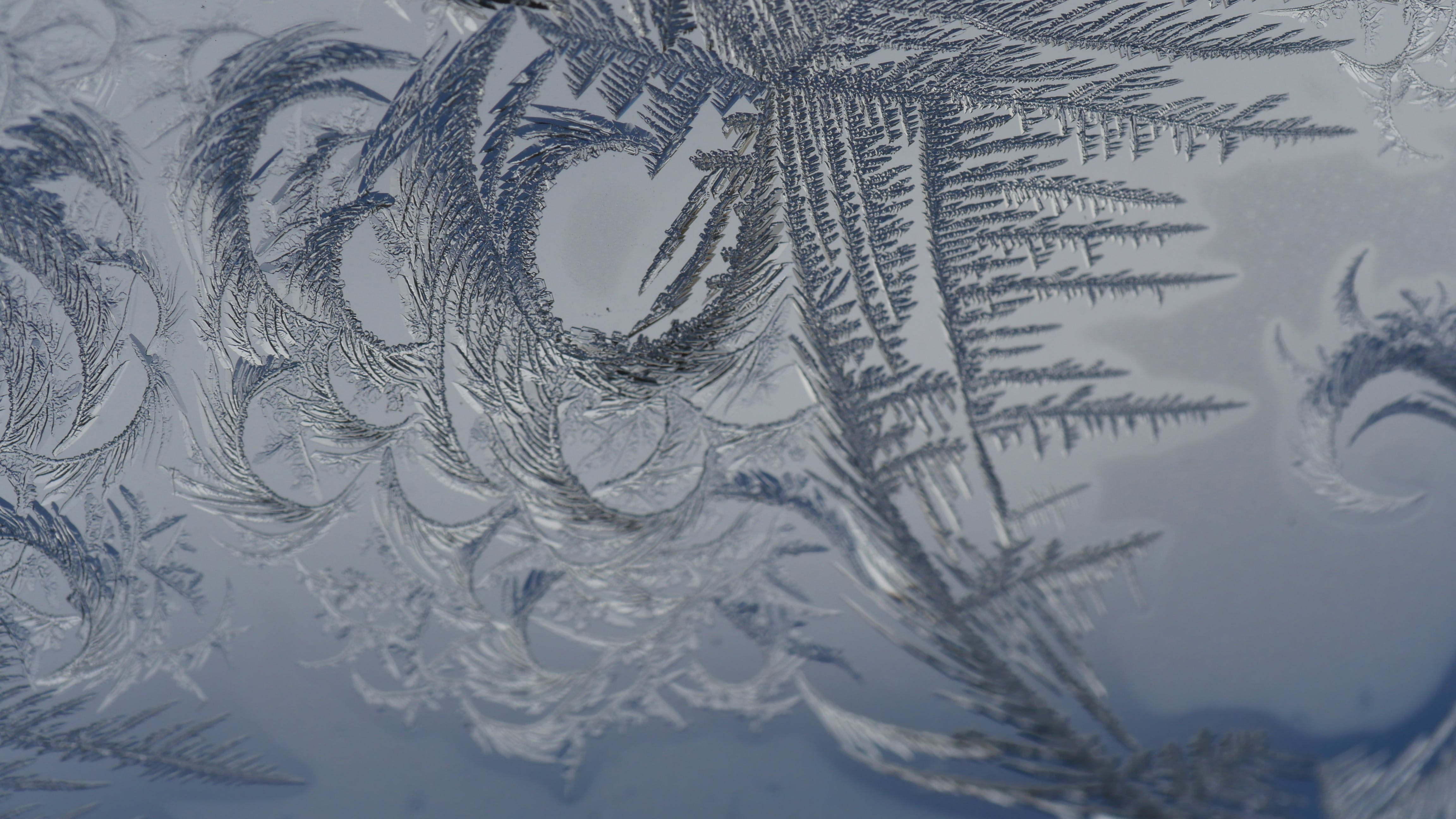 Free stock photo of frost, frosted glass, macro photography, winter