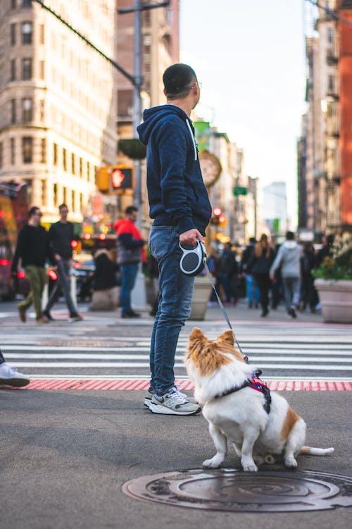 Man Standing While Holding Dog Leash Near Dog