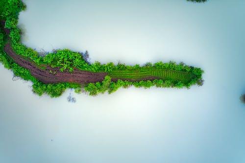 ada, ağaçlar, büyüme, büyümek içeren Ücretsiz stok fotoğraf