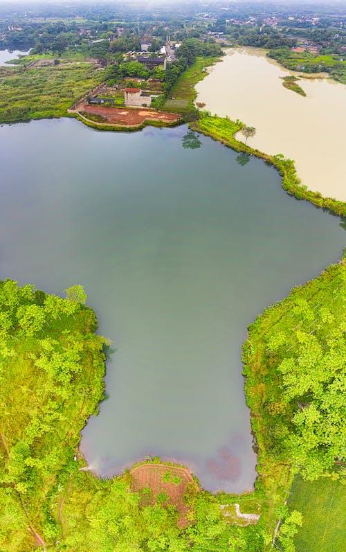 Безкоштовне стокове фото на тему «вода, Денне світло, дерева»