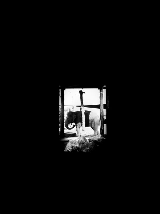 black and white, minimal