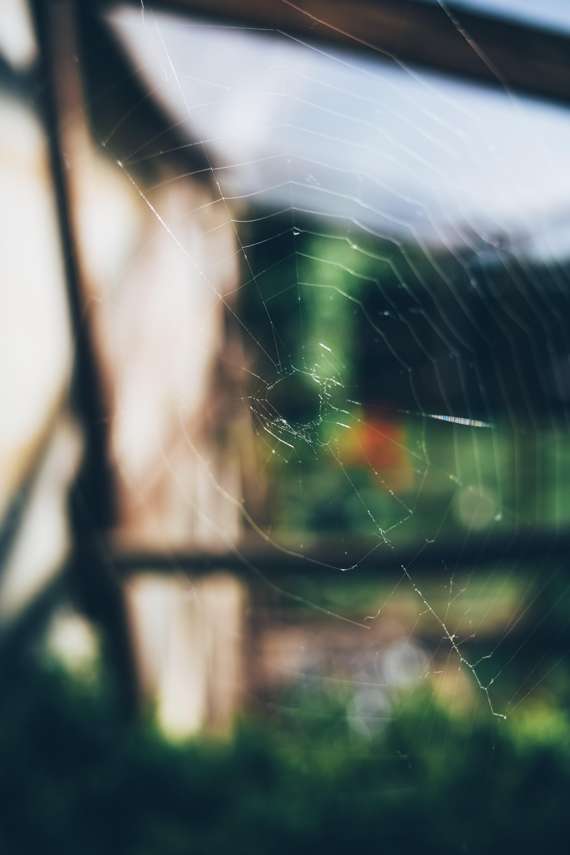 Ảnh lưu trữ miễn phí về Bo mạch, mạng nhện, mẫu, mơ hồ