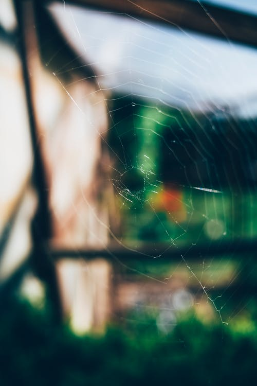 Spider Web on Brown Wooden Fence
