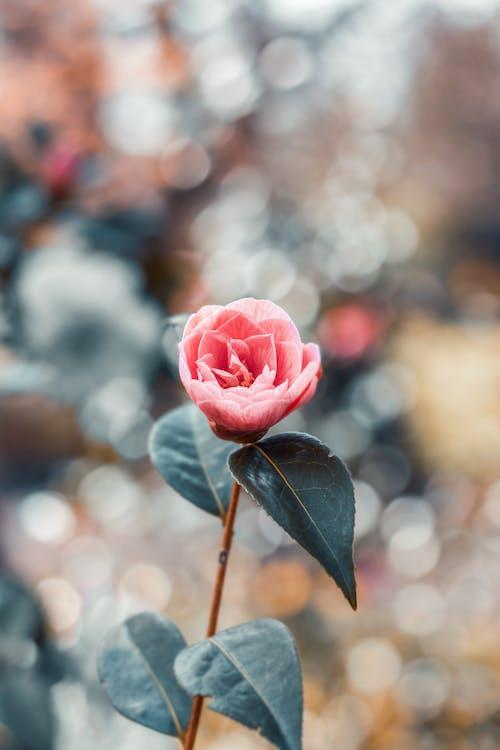 flora, jasny, kwiat