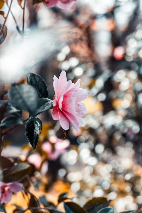宏觀, 成長中, 明亮, 植物群 的 免费素材照片