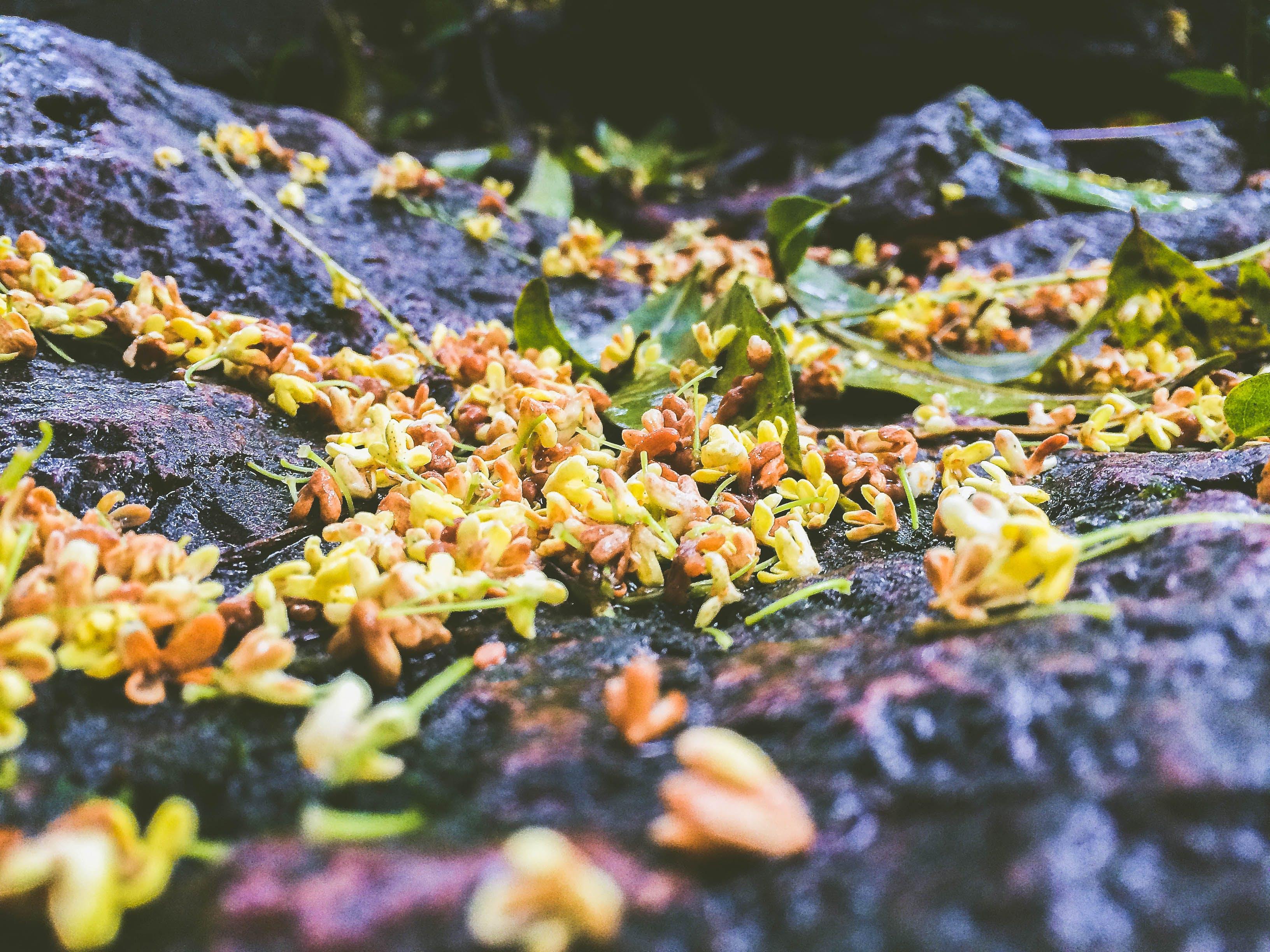 Free stock photo of after the rain, autumn, autumn colours, autumn leaves