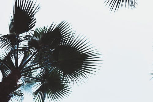 Free stock photo of art, calif, coconuts, nature