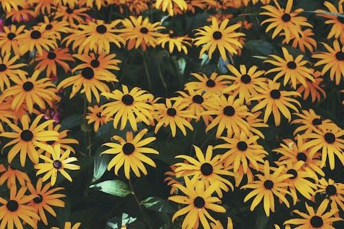 Free stock photo of art, flowers, girly, grunge