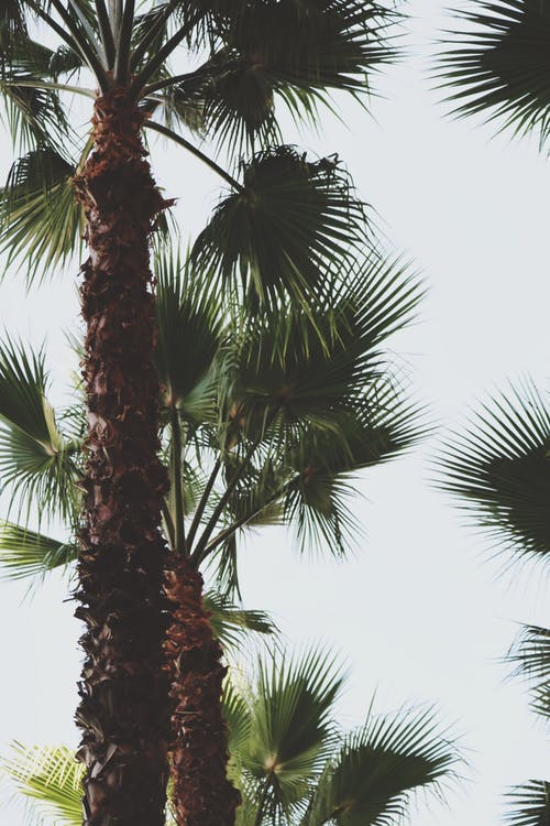Free stock photo of art, nature, palm trees, tropical