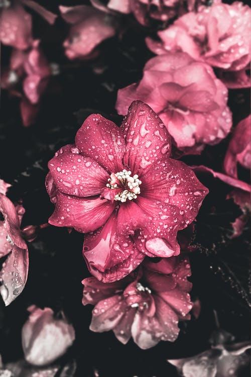 blomster, blomsterbuket, blomstrende