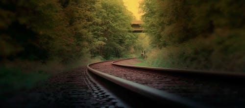 Foto d'estoc gratuïta de arbres, bosc, boscos, ferrocarril