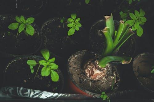 Ảnh lưu trữ miễn phí về bóng đèn, cây xanh, chậu hoa, đất