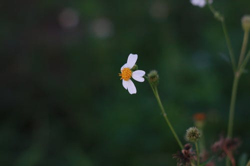 Ingyenes stockfotó a virágok teljes virágzásúak témában