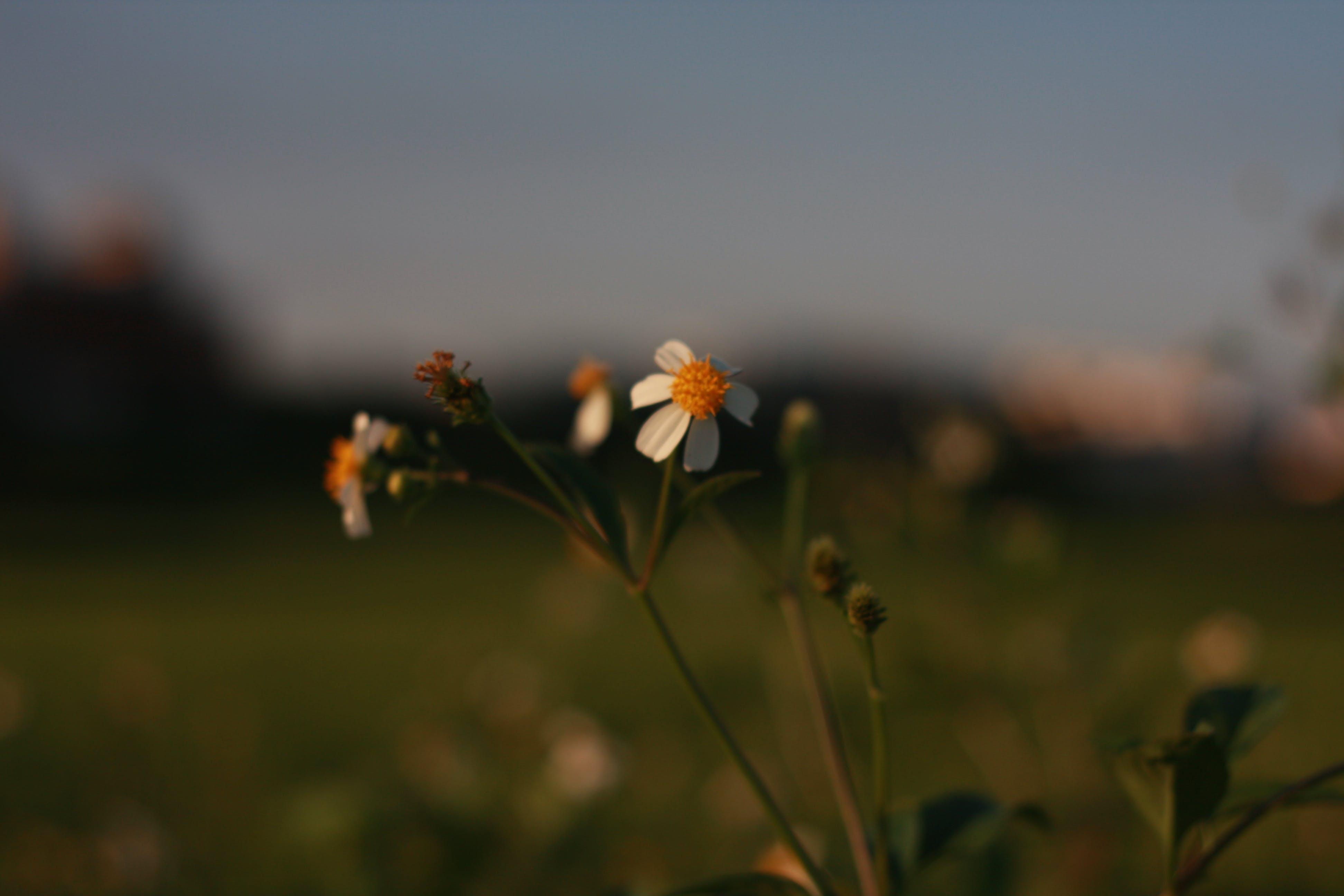 Δωρεάν στοκ φωτογραφιών με τα λουλούδια σε πλήρη άνθιση
