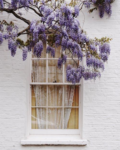 Fotobanka sbezplatnými fotkami na tému denné svetlo, dom, farba, flóra