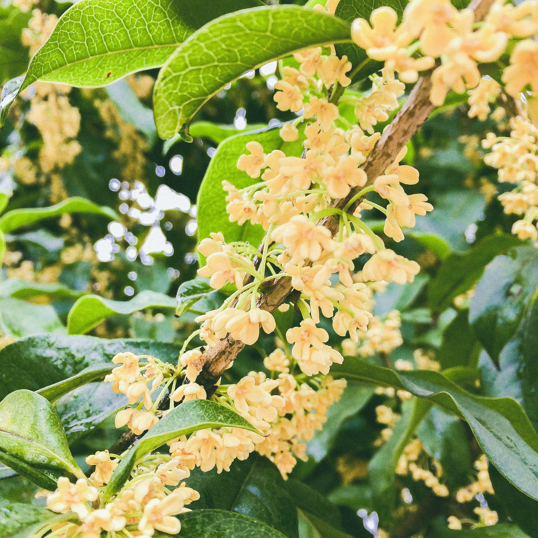 Free stock photo of autumn, beautiful flowers, desktop wallpaper, fragrance