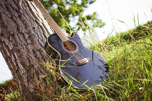 Black Acoustic Cutaway Guitar on Tree