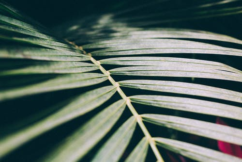 Бесплатное стоковое фото с дерево, дневной свет, завод, зеленые листья