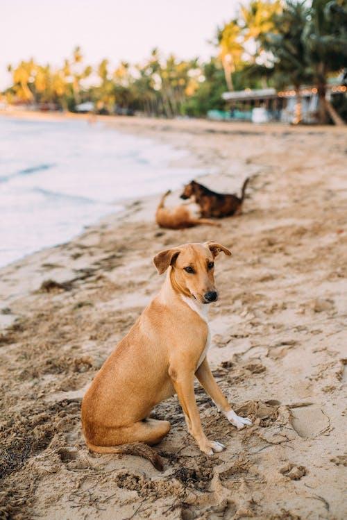 Foto stok gratis air, anjing jalanan, anjing liar, berdarah murni