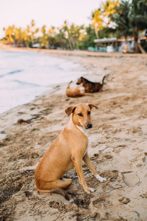 Shallow Focus Photo of Brown Dog Sitting on Seashore