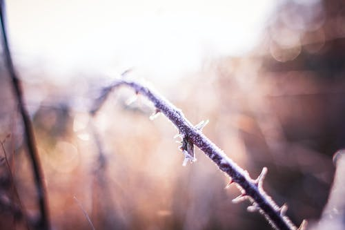 Free stock photo of bush, forest, hoarfrost, nature