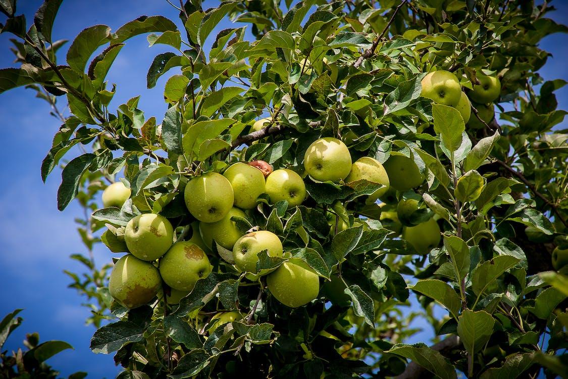 #agbiopix appels landbouw henderson county