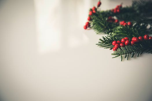 christmas holly beside white painting concrete wall - Christmas Backround