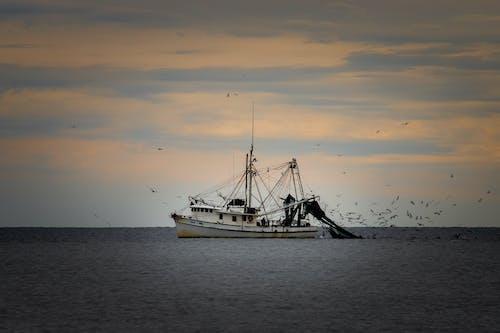 Foto stok gratis #agbiopix memancing udang budidaya pulau ek