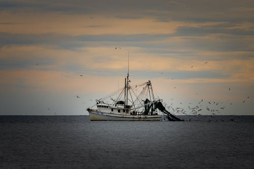 Free stock photo of #agbiopix fishing shrimp oak island aquaculture