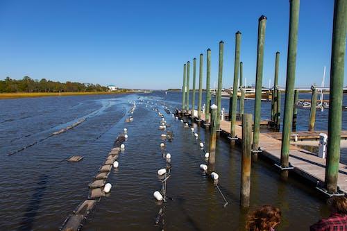 คลังภาพถ่ายฟรี ของ #agbiopix หอยนางรมเตียงปลาเพาะเลี้ยงสัตว์น้ำ