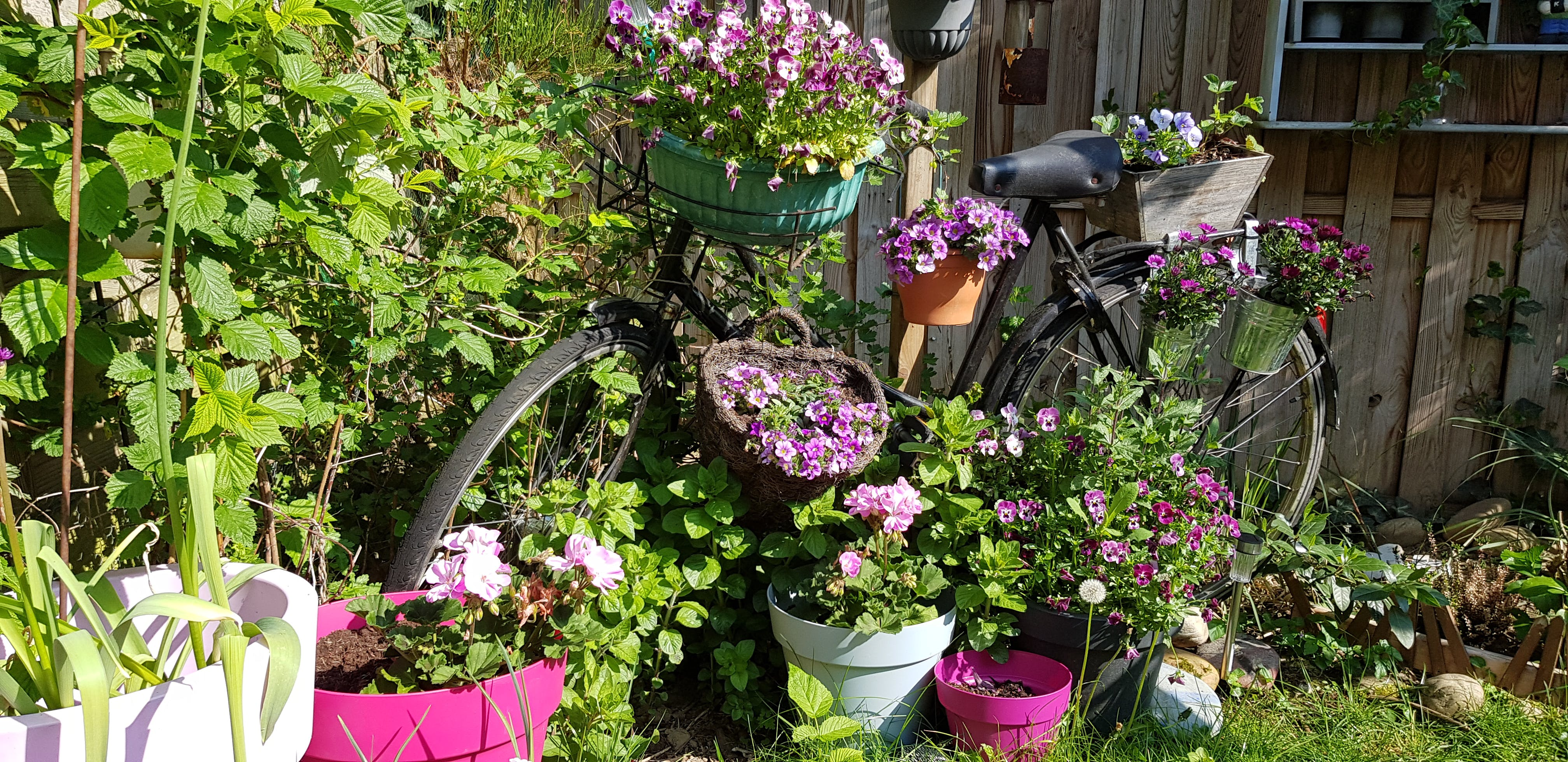 Free stock photo of bicycle, bike, flowers, garden feature
