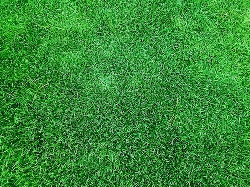 Photos gratuites de brin d'herbe, champ d'herbe, hautes herbes, herbe
