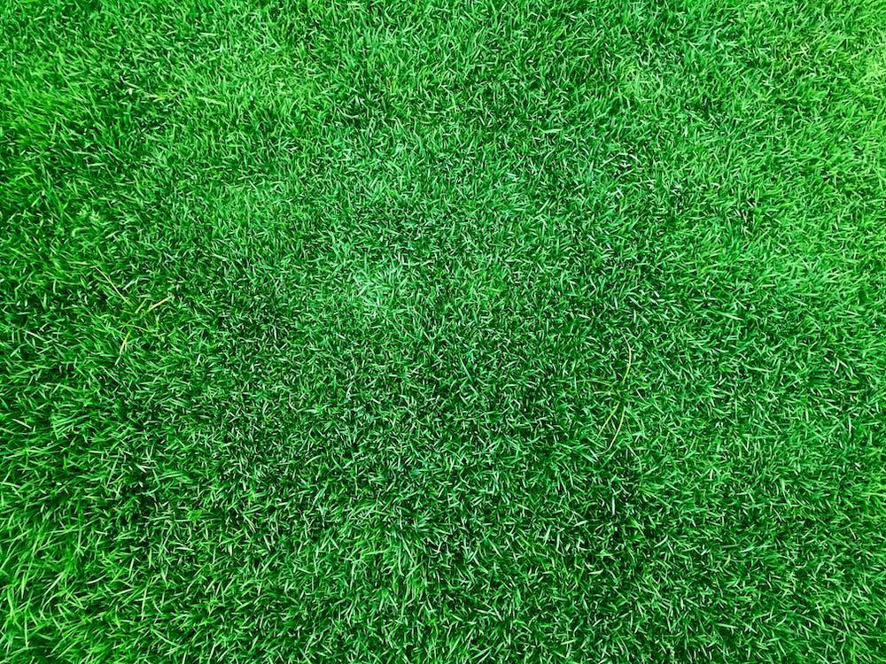 bri d'herba, camp d'herba, germinat de blat