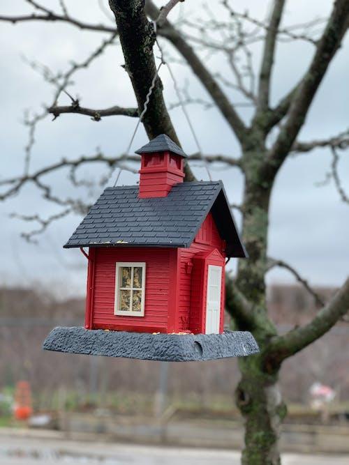 Free stock photo of bird's nest, nature, tree
