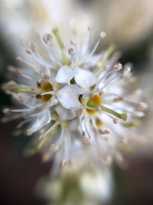 Gratis stockfoto met bianco, bloemen, bloesem, mooie bloemen