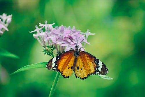 Photos gratuites de fleur, magnifiques fleurs, papillon, papillon monarque