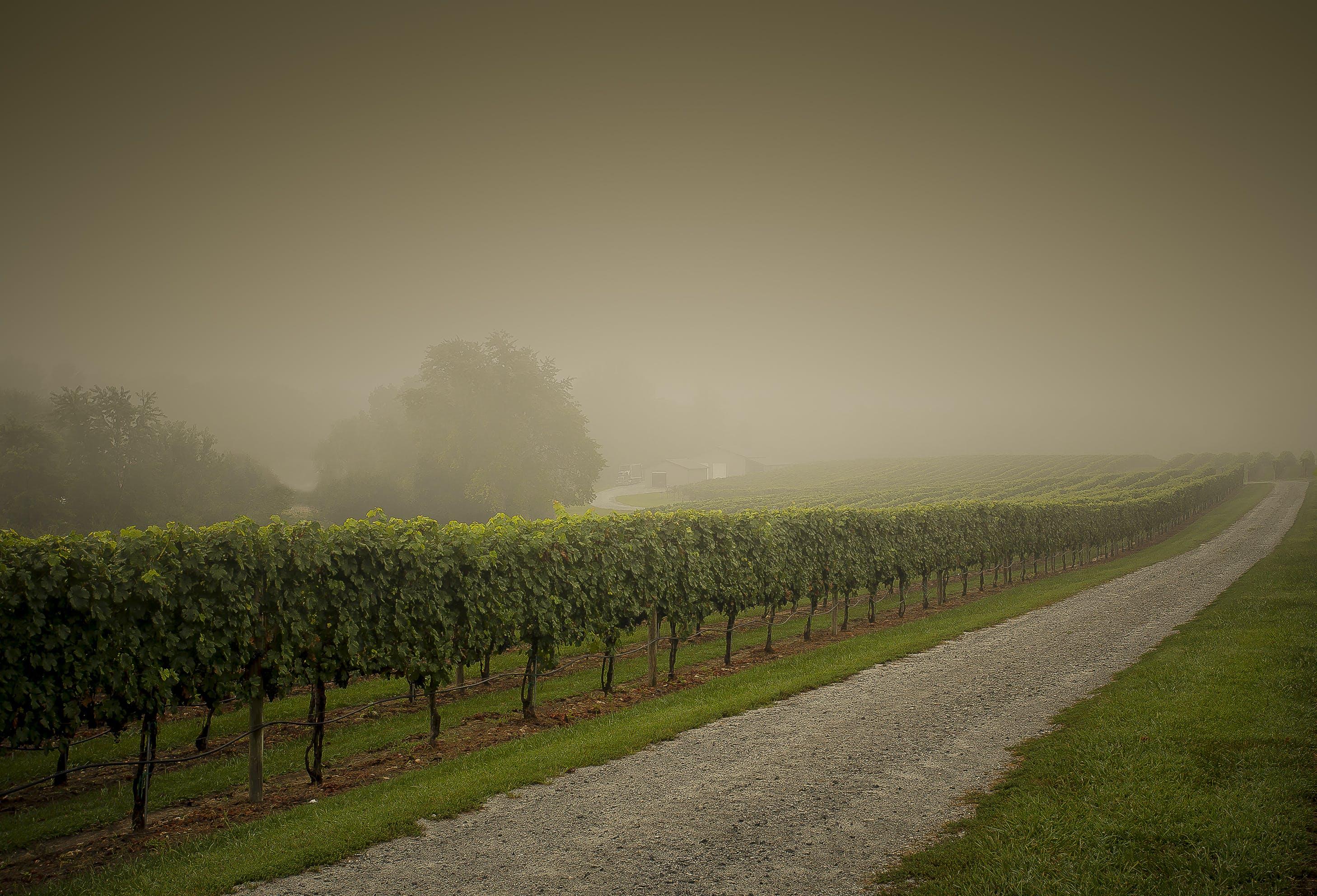 Δωρεάν στοκ φωτογραφιών με αγρόκτημα, αγροτικός, αμπέλι, άμπελος