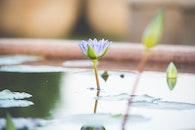 water, summer, garden