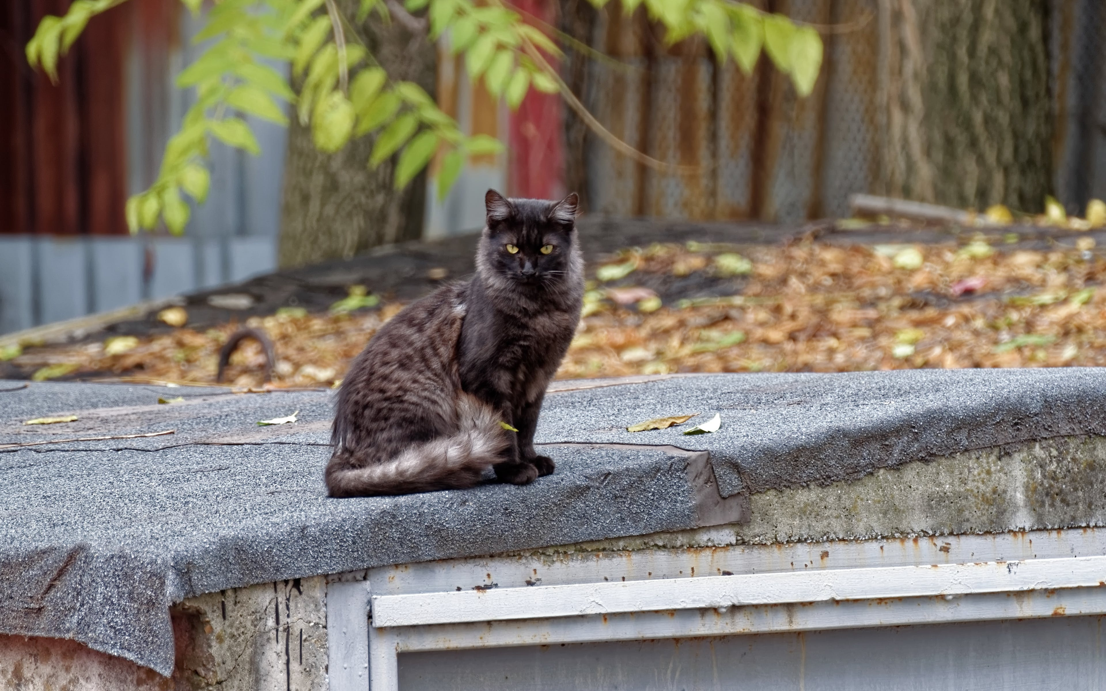 คลังภาพถ่ายฟรี ของ นั่ง, สัตว์, สัตว์เลี้ยง, แมวดำบนหลังคา